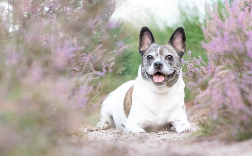 Honden & Familiefotografie